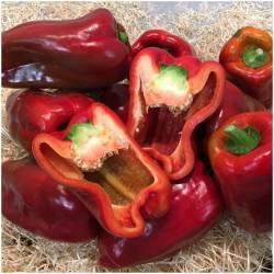 Rote Paprika (Pimiento Rojo)