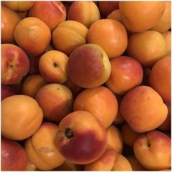 Frische Aprikosen...