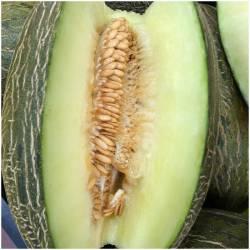 1 ganze frische Melone Sapo