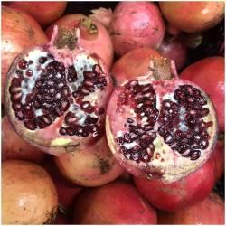 Granatäpfel Acco