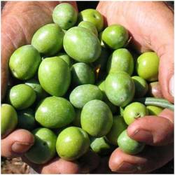 olives raw, fresh from...