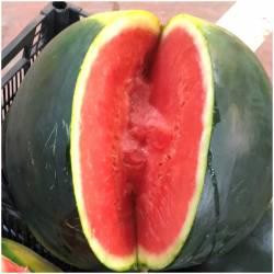 Wassermelone (Sandía)