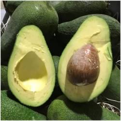 Avocado Fuerte