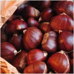 Chestnut (Castañas)