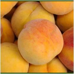 Frische gelbe Pfirsiche