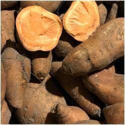Frische Süßkartoffeln