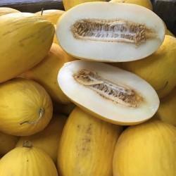 1 ganze frische Gelbe Melone