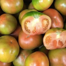 "Tomato ""Verde"""
